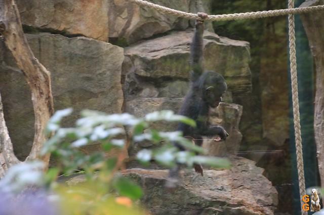 Zoo 26.06.2020 Wasserzeichen (13)
