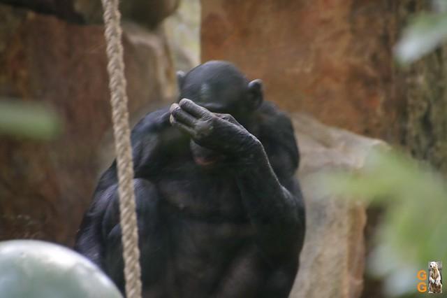 Zoo 26.06.2020 Wasserzeichen (12)