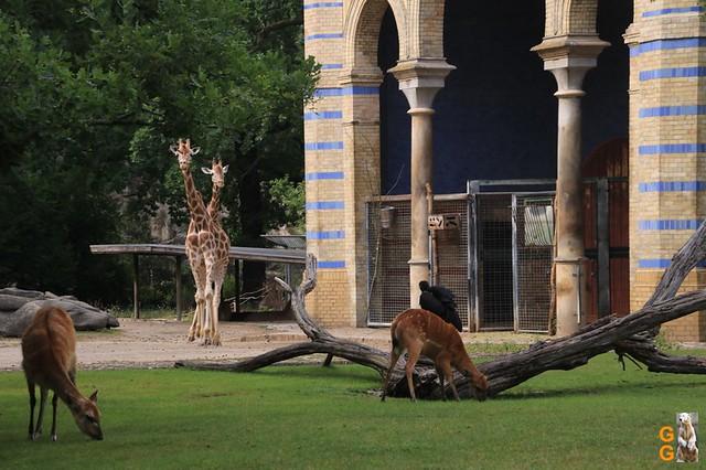 Zoo 26.06.2020 Wasserzeichen (10)