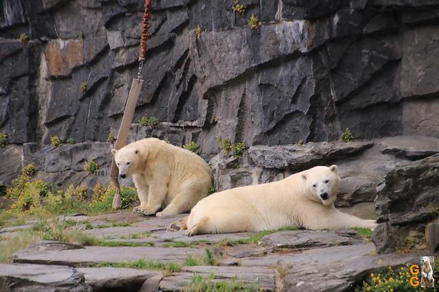 77Eigene Bilder Tierpark Friedrichsfelde 04.07.20 Bulk Watermark