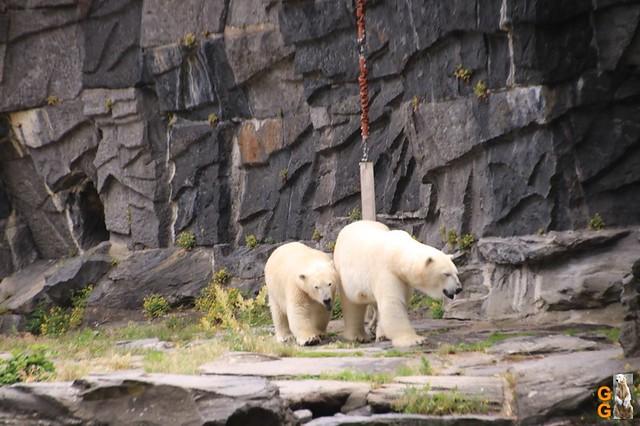 73Eigene Bilder Tierpark Friedrichsfelde 04.07.20 Bulk Watermark