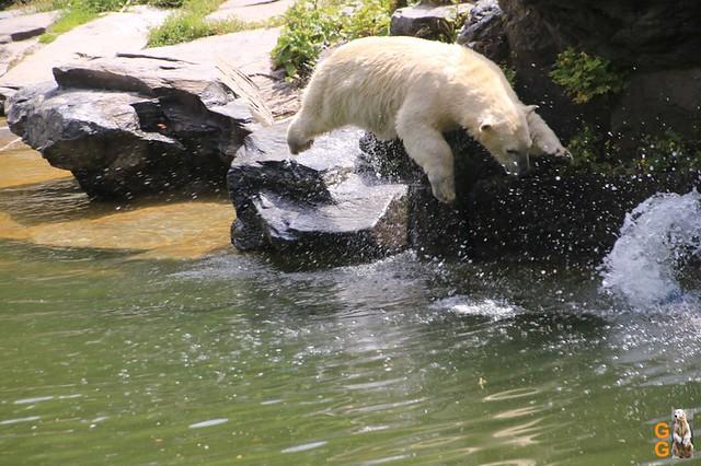 67Eigene Bilder Tierpark Friedrichsfelde 04.07.20 Bulk Watermark