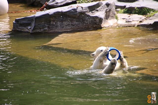 57Eigene Bilder Tierpark Friedrichsfelde 04.07.20 Bulk Watermark