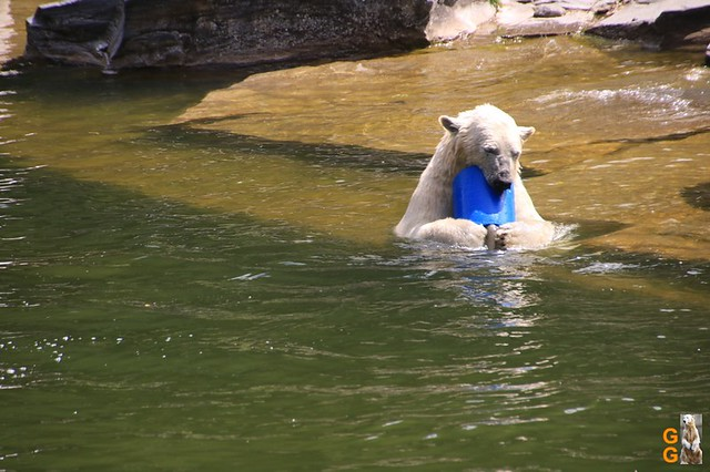 56Eigene Bilder Tierpark Friedrichsfelde 04.07.20 Bulk Watermark