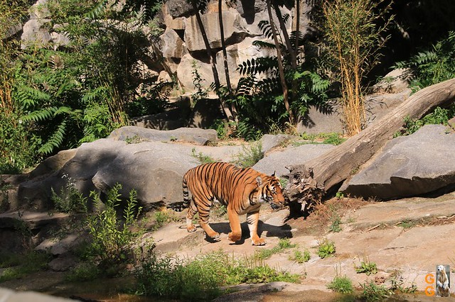 20Eigene Bilder Tierpark Friedrichsfelde 04.07.20 Bulk Watermark