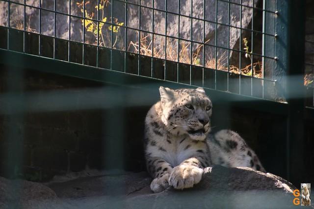 19Eigene Bilder Tierpark Friedrichsfelde 04.07.20 Bulk Watermark