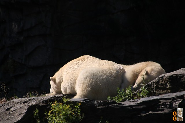 13Eigene Bilder Tierpark Friedrichsfelde 04.07.20 Bulk Watermark