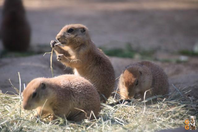 9Eigene Bilder Tierpark Friedrichsfelde 04.07.20 Bulk Watermark