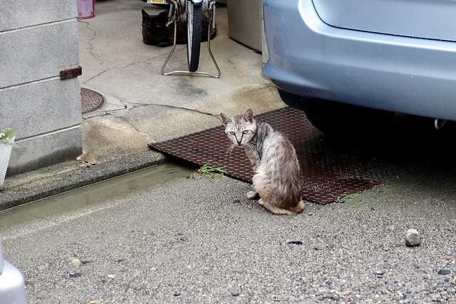 Today's Cat@2020ー07ー06
