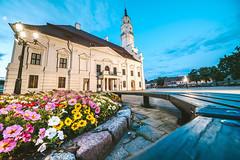 Summer flowers | Kaunas #187/365