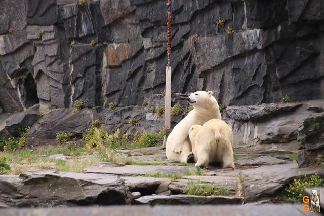 75Eigene Bilder Tierpark Friedrichsfelde 04.07.20 Bulk Watermark