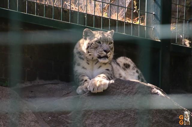 18Eigene Bilder Tierpark Friedrichsfelde 04.07.20 Bulk Watermark