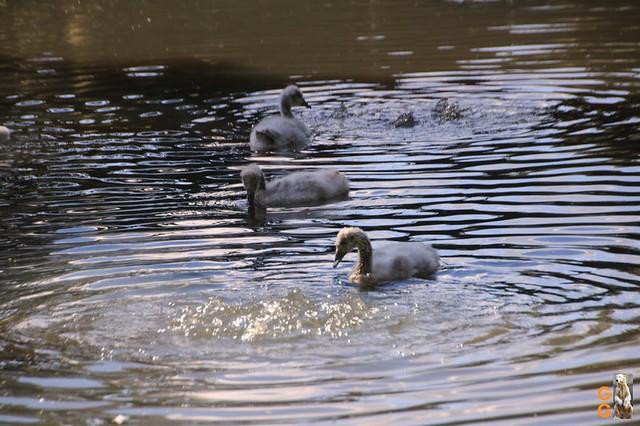 14Eigene Bilder Tierpark Friedrichsfelde 04.07.20 Bulk Watermark