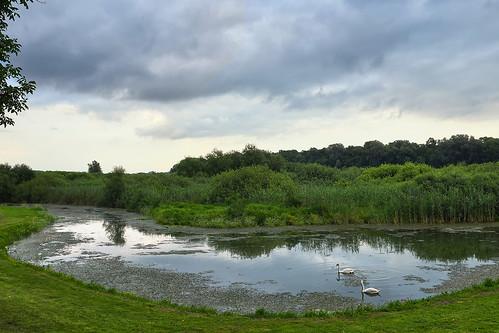 swan nature reserve special obedska bara birds fisherman bukvic ivan river swamp reflection serbia srbija priroda labudovi refleksija ptice nikon d500 nikond500 outdoor