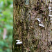 Mushrooms on the Vertical _1096