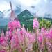 "<p><a href=""https://www.flickr.com/people/karolkozak/"">Karol Kozak</a> posted a photo:</p>  <p><a href=""https://www.flickr.com/photos/karolkozak/50083370591/"" title=""Mountain life""><img src=""https://live.staticflickr.com/65535/50083370591_1e4d19df4c_m.jpg"" width=""160"" height=""240"" alt=""Mountain life"" /></a></p>"