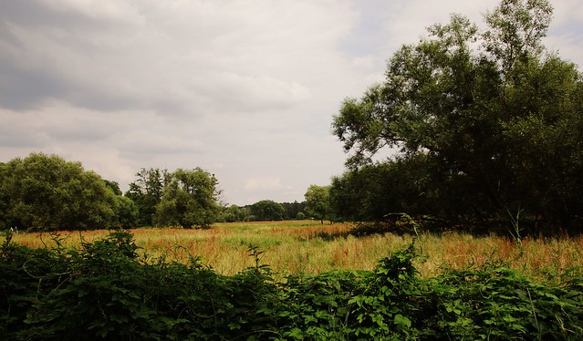 Tiefwerder Wiesen - one of the natural areas within Berlin's city limits next to the river Havel and close to Spandau.