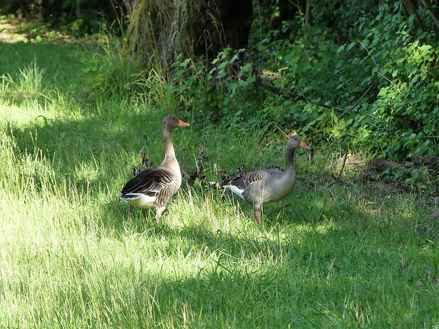 Naturschutzgebiet Neckarwasen