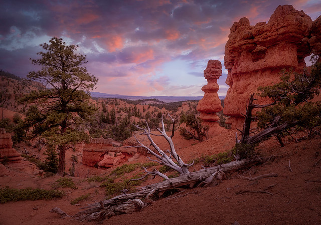In Red Canyon, Early Evening, #3