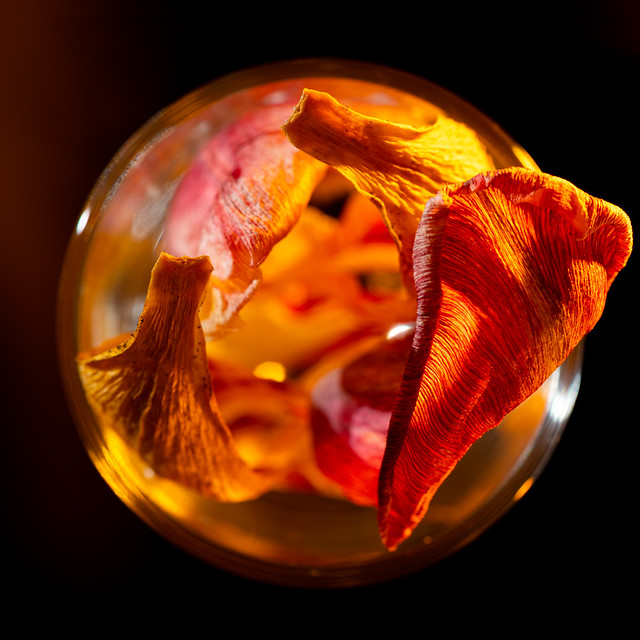 Squared Circle - Dried tulip leaves in a liquor glass - My entry for todays