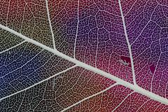 Leaf husk colour background
