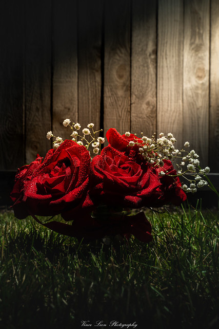 A Rose... 🌹