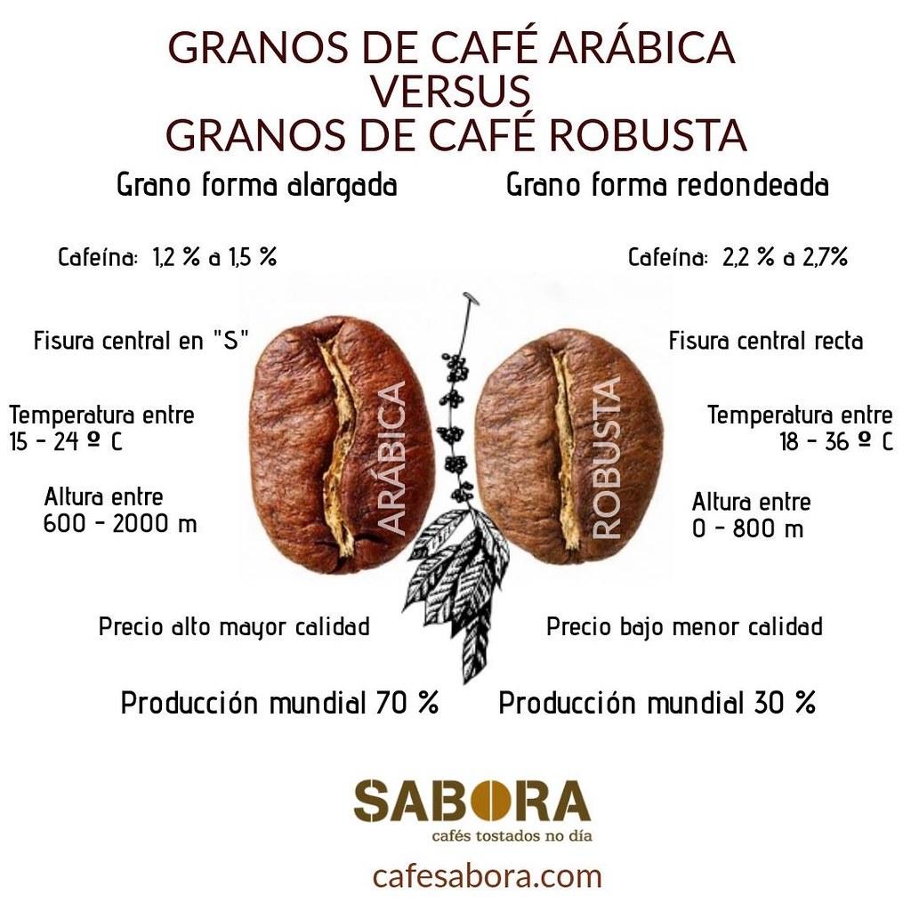 Grano de café arábica versus grano de café robusta Infografía