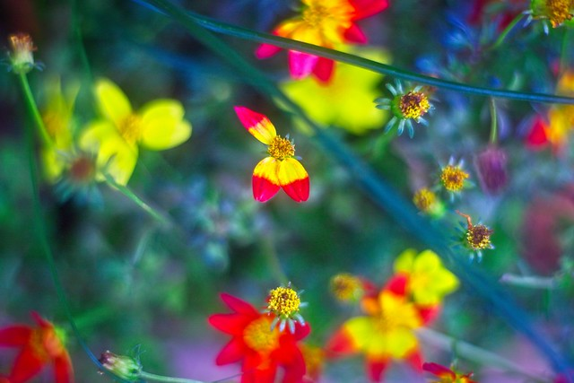 colors and flowers