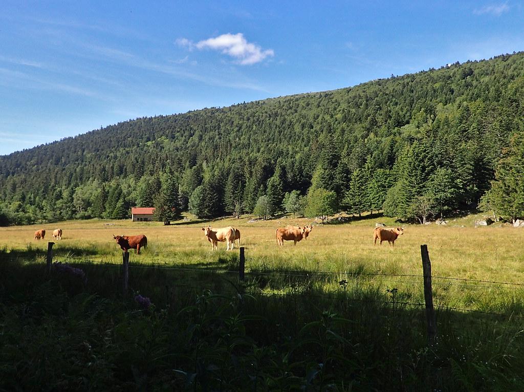 Vallée du Fossat et Forez