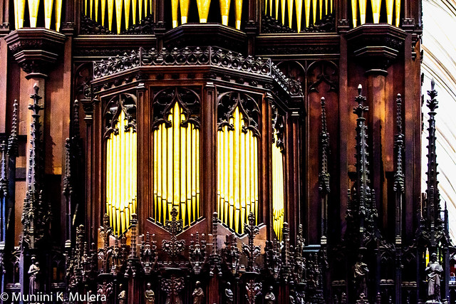 Organ close up-2