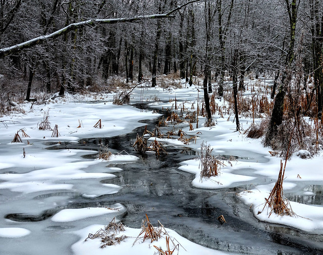 Wallkill Headwaters in Winter
