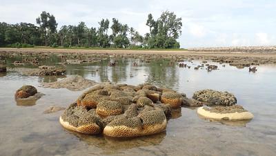 Living reefs of Pulau Hantu