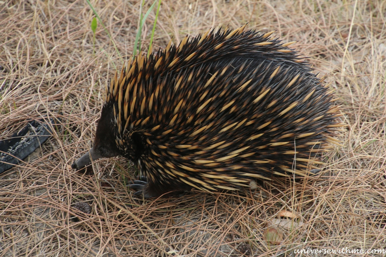 Australia Trip_081