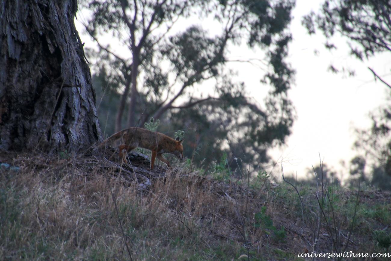 Australia Trip_033