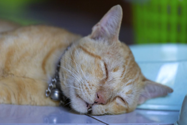 Funny ginger cat sleeping at home