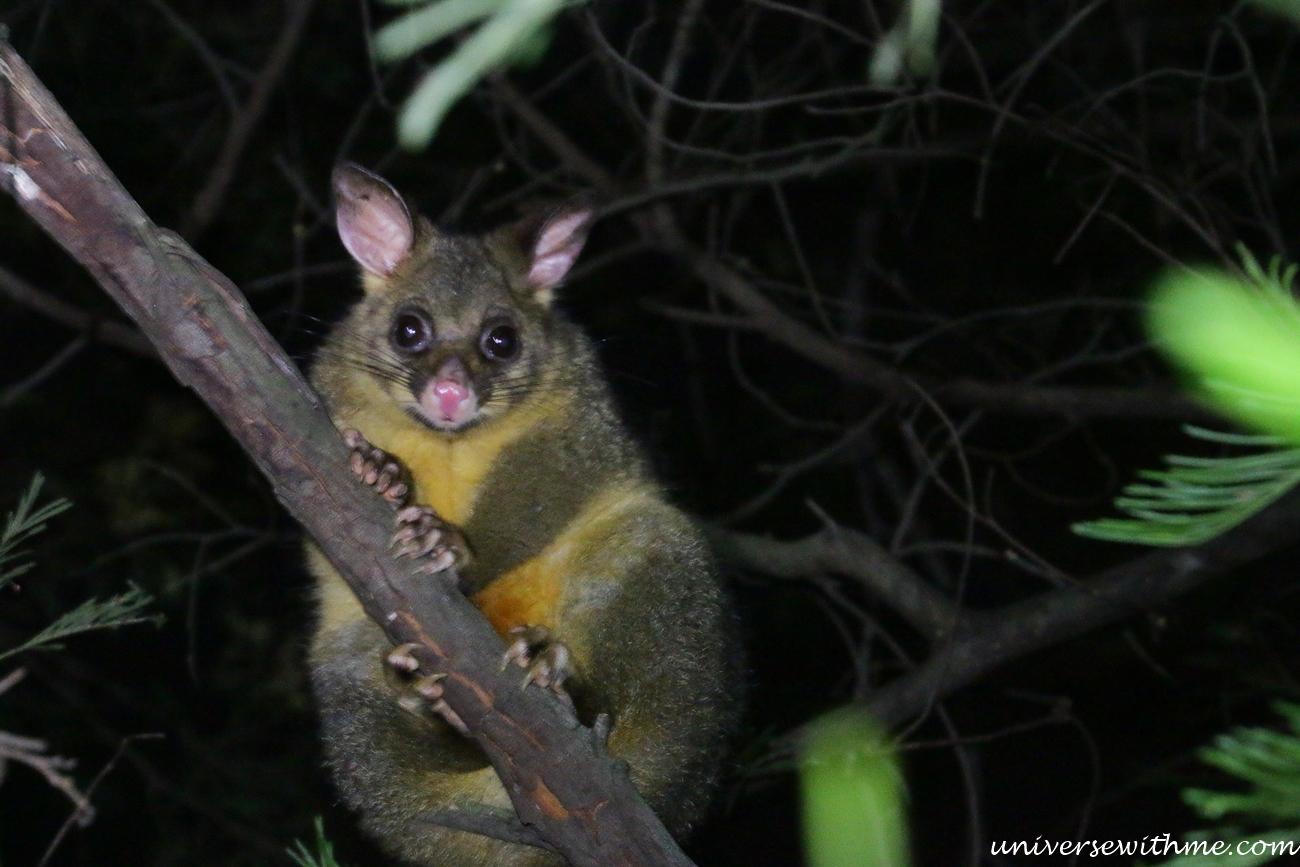 Australia Trip_046
