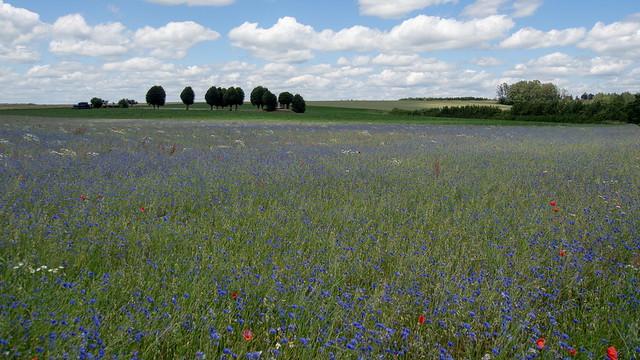 Flowerfield Houdigny