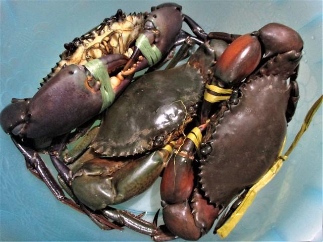 Big crabs