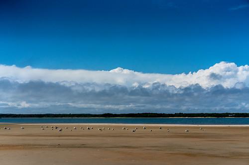 pond greatpond marthasvineyard massachusettes sky clouds water leau landscape landscapephotography layers sand birds sea seaside seashore seascape seabirds seagull