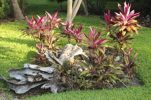 Pink jungle plants puerto maldonado, Valentin Imperial Riviera Maya, Mexico