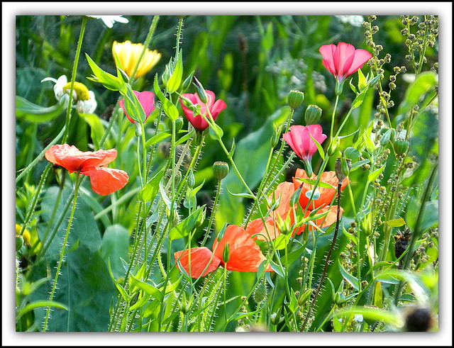 Flower Of The Day - Wild Flowers