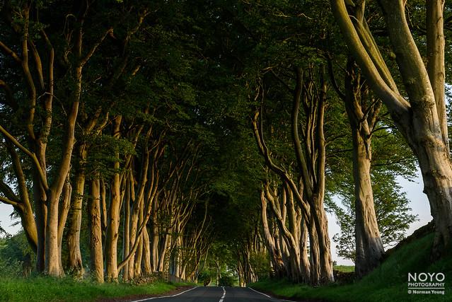 noyo-Crosswoodhill-Trees-2020-0949