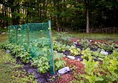 Flower - Vegetable Garden Update