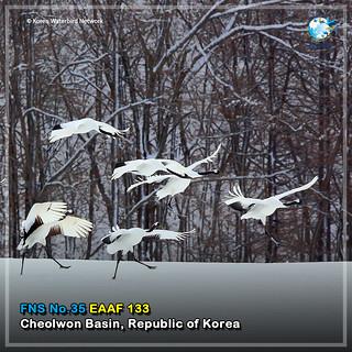 No. 36_#FlywayNetworkSite (Cheorwon) Card News