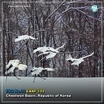 Cheorwon_#FridayNetworkSiteCard News