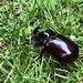 Käfer (2)
