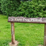 Lazy Dog Wood