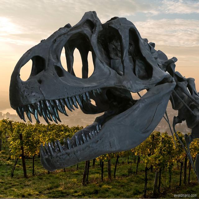 last sunday morning, in the wineyard ...