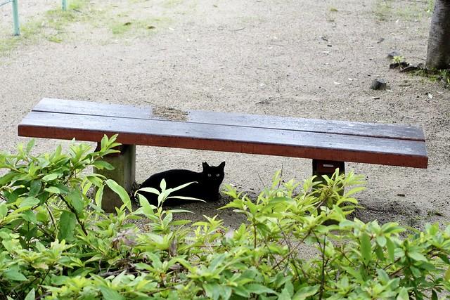 Today's Cat@2020ー07ー07