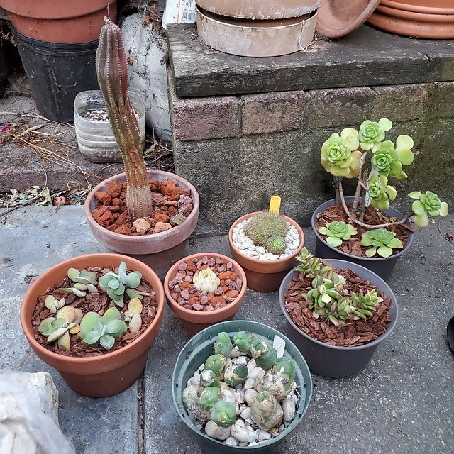 Cleaned Up Succulents